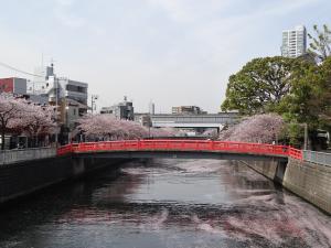 pont_sakura